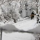 A Walk to the Well in the Snow, Barda, Romania by Dennis Melling