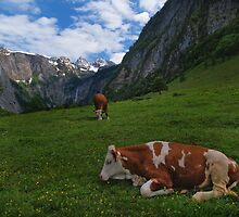 Konigsee Cows by dags