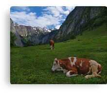 Konigsee Cows Canvas Print
