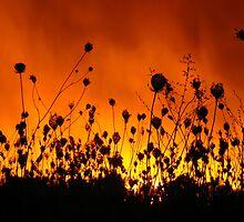 Sky On Fire by Jeannette Garneau