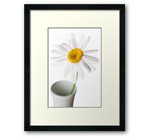 White Chrysanthemum 2 Framed Print