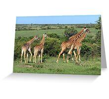 Masai Mara Giraffe Family  Greeting Card