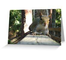 Attack of the killer squirrel Greeting Card