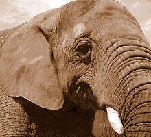 Elephant ~ by Kate Towers IPA