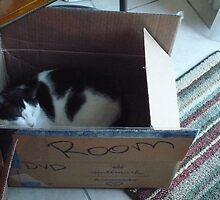 Sleeping in a Cardboard Box! by Snoboardnlife
