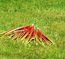 My Rhubarb Pile :) by TerriRiver