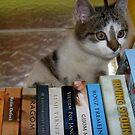 Grooming library by Ana Belaj