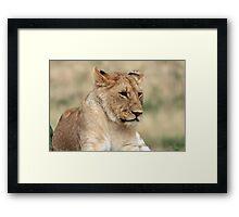 Lioness - Masai Mara - Kenya Framed Print