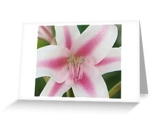 Lily inside Greeting Card