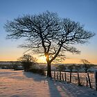 Winter Ash Tree by Chris Charlesworth