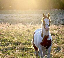 Sunshine Spotlight by Hannah McPhee