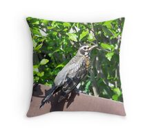 Sweet Baby Robin Throw Pillow