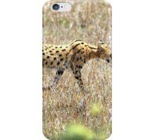 Serval Cat - Kenya iPhone Case/Skin