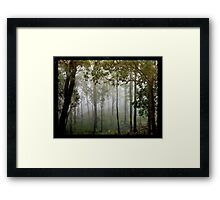 Eucalypts in the Mist Framed Print