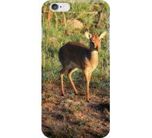 Masai Mara Dikdik Deer iPhone Case/Skin