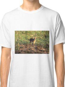 Masai Mara Dikdik Deer Classic T-Shirt
