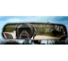Car ride companion Photographic Print
