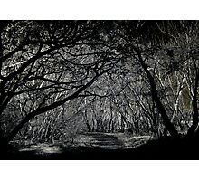 O! Wanderers in the shadowed land Photographic Print