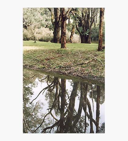 On reflection... Photographic Print