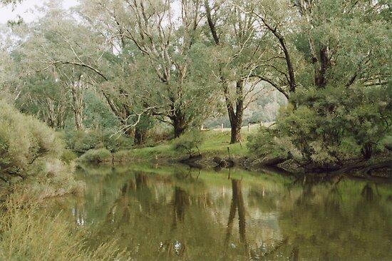 Blackwood River by Darryl Beer