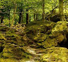 Forest Steps  by mandahipshon