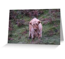 Calf in The Trossachs National Park Greeting Card