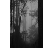 invisible giants Photographic Print