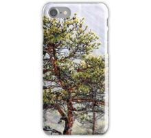 8.1.2015: Pine Tree, Snowfall II iPhone Case/Skin