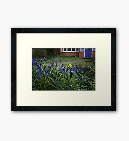 Blue Flowers, Blue Door Framed Print