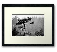 8.1.2015: Pine Tree, Snowfall IV Framed Print