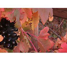 autumn royal Photographic Print