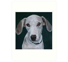 Portrait of a Greyhound Art Print