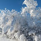 Beautiful Frost and Snow...Christmas Morning 2014 by MaeBelle