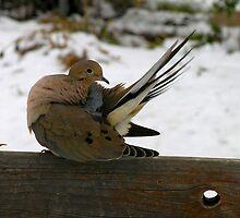 Backyard bird by michelle123