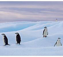 Chinstrap Penguins. Photographic Print