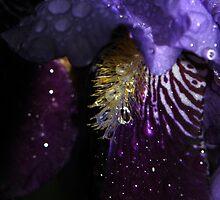 Water on Velvet... by LindaR