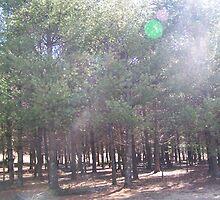 Pine Meadow by vendetta