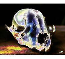 Elf Skull Photographic Print