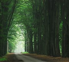 Walking down the forest aisle by jchanders