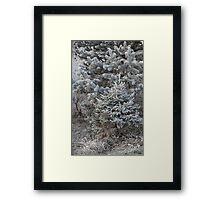 forest trees in hoarfrost Framed Print