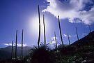 Post bushfire regrowth by Travis Easton