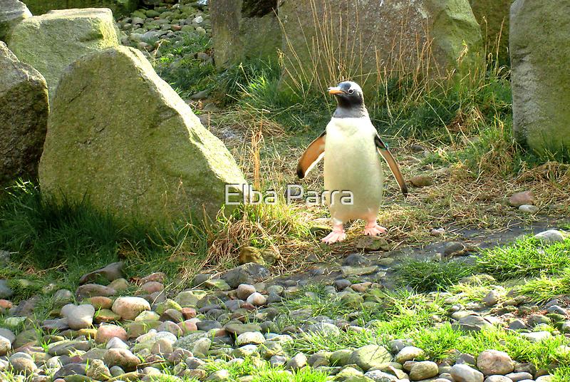 The Pinguin... by Elba Parra