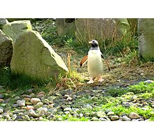 The Pinguin... Photographic Print
