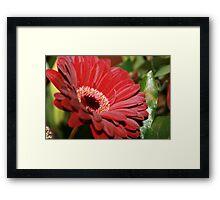 Gerboa Red Framed Print