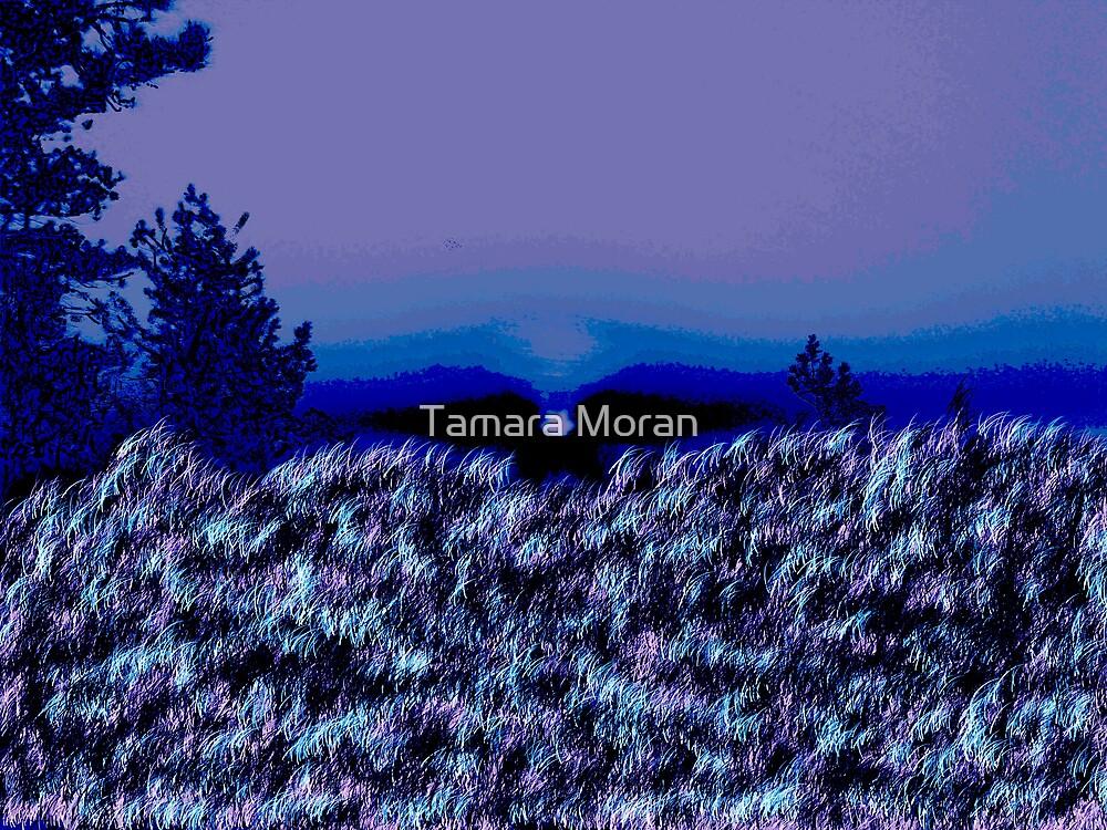 Sunrise  by TAMARA MORAN