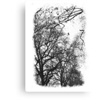 St. James' Park Canvas Print