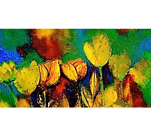 The Tulip Bed Photographic Print