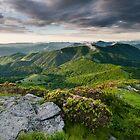 Roan Highlands Southern Appalachian Mountain Spring Landscape by MarkVanDyke