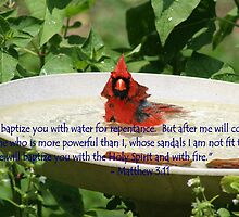 Cardinal Baptism by lyndamarie