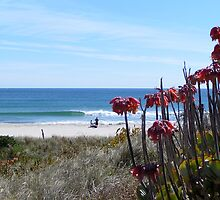 Mt Manganui by Andrew Carruthers
